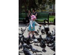 Дети голубей фото 2