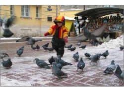 Дети голубей фото 3