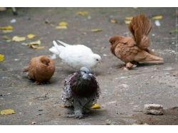 Дети голубей фото 5
