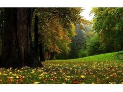 Ранняя осень фото 4