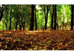 Ранняя осень фото 5