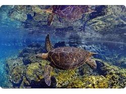 Подводный мир charles 2