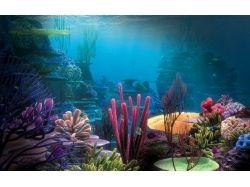 Подводный мир charles 4