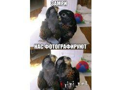 Прикольные картинки  с попугаями 1
