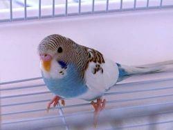 Прикольные картинки  с попугаями 4