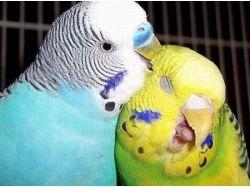 Прикольные картинки  с попугаями 5