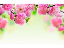Картинки цветы на рабочий 7