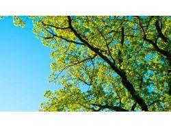 Летняя природа картинки 5