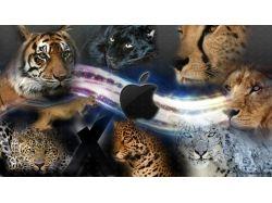 Картинки зима с тиграми 7