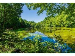 Природа картинки красивые скачать бесплатно 7