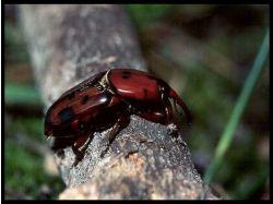 Все насекомые фото и название 2