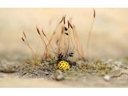 Ужасные насекомые фото с названиями 5