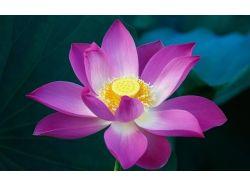 Картинки цветы с большим разрешением 7