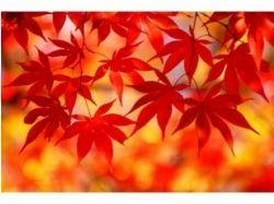 Волшебная осень фото 2