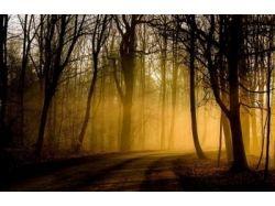 Волшебная осень фото 4