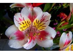 Картинки цветы красивые на юбилей рамка 1