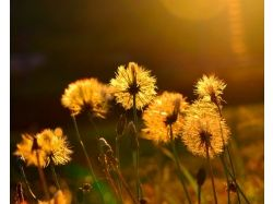 Фото лето солнце жара 7