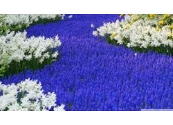 Картинки лето цвети 2