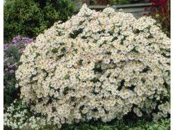 Фото цветы летом 3