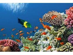 Клипарт.подводный мир 2