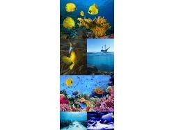 Клипарт.подводный мир 4