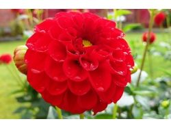 Астры фото цветы 2