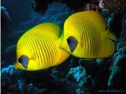 В контакте подводный мир играть 3