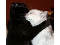 Кошачья любовь фото 2
