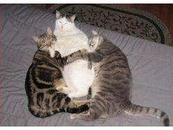 Кошачья любовь фото 3