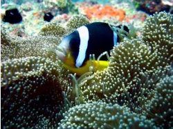 Остров маврикий подводный мир 3