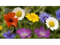 Фото цветы крупный план 2