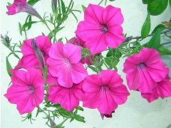 Фото цветы крупный план 4