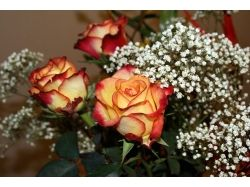 Фото цветы крупный план 5