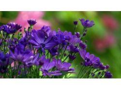 Фото цветы крупный план 6