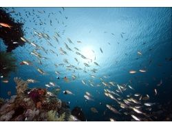 Как купить декор подводный мир 5