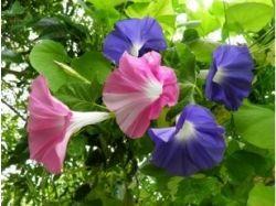Картинки цветы с бабочками 4