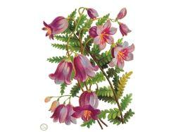 Декупаж картинки цветы колокольчики 2