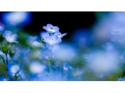 Декупаж картинки цветы колокольчики 6