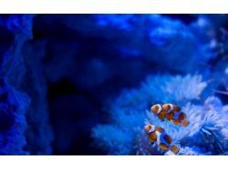 Обои для стола подводный мир 1