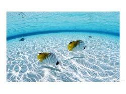 Обои для стола подводный мир 3