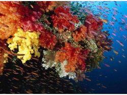 Онлайн фильмы подводный мир 2