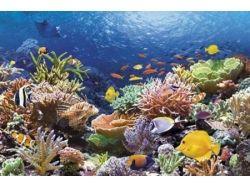 Онлайн фильмы подводный мир 5