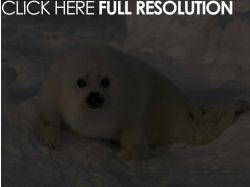 Фото животных занесенных в красную книгу россии