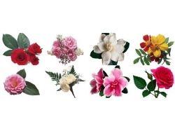 Фото цветы на белом фоне