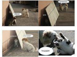 Новые картинки про животных