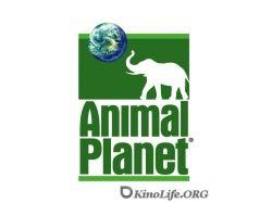 Смотреть бесплатно картинки животных