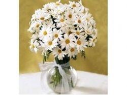 Фото живых красивых цветов
