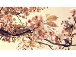 Картинки рисованные бабочки и цветы