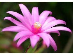 Морские цветы фото