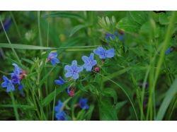 Картинки цветы трава
